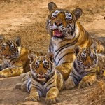 Sariska Tiger Reserve and National Park