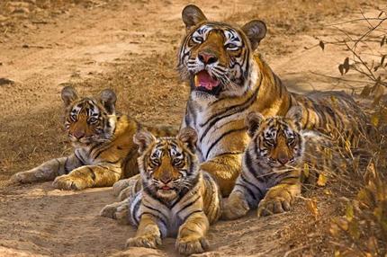 Sariska Tiger Reserve and National Park